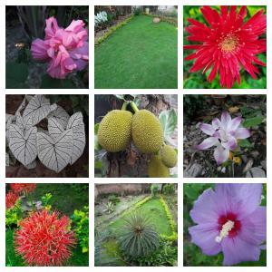 Collage_Monjusri Das garden.jpg